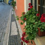 Red geraniums fill appear in window boxes in Prague. (photo by Leah Heiser)