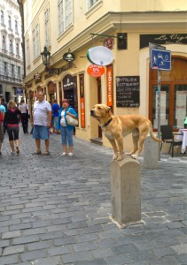 Locals pulled out their phones and cameras to capture this stray dog posing in a busy alley way.